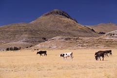 REGIÓN DE PUNO, PERÚ: Paisaje rural visto desde la Carretera hacia Yunguyo. (thejourney1972 (South America addicted)) Tags: peru de altiplano puno región