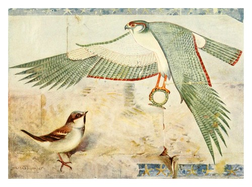 017-Gorrion en  el templo de Deir-el Bahari-Egyptian birds for the most part seen in the Nile Valley (1909)- Charles Whymper