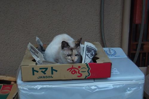Today's Cat@2010-02-28