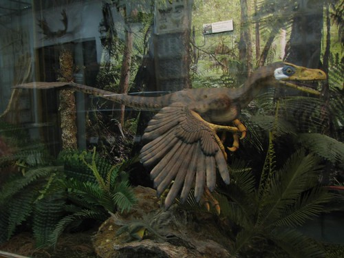 City Museum Bambiraptor
