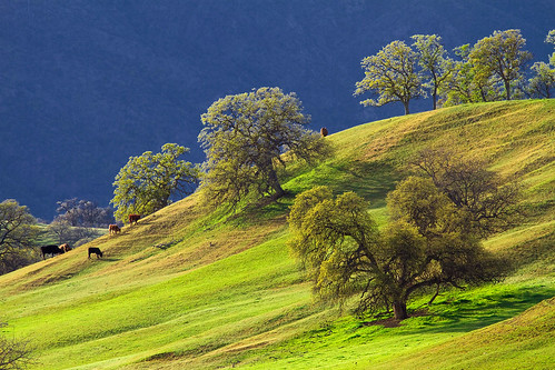 Rolling Hills near Paskenta