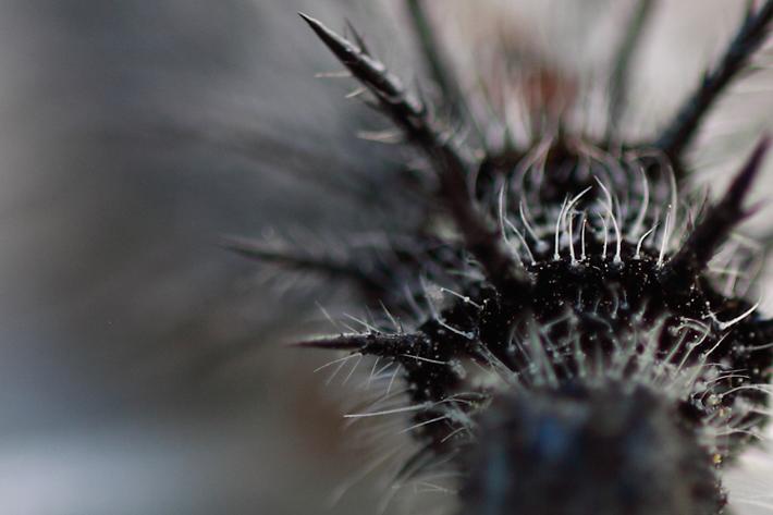040210_bug_Caterpillar02