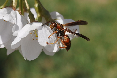 wasp and flower