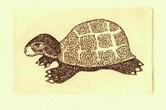 черепаха 4 001 (tim.spb) Tags: original etching turtle postcard small ornament plates proverbs desigh черепаха открытки графика малые черепашка aquafortis формы офорт поговорки печатные