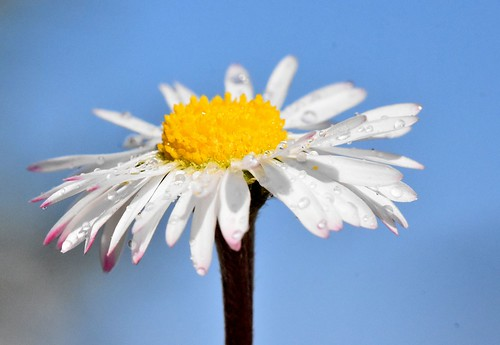 bellissimo fiore