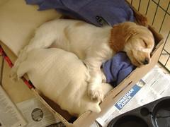 Rona as a sleepy puppy (cocopie) Tags: