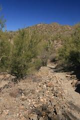 IMG_9469 (simon_travelboy) Tags: arizona tucson saguaronationalpark