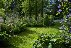 Spring border - Late afternoon in May (Rosarian49) Tags: flowers plants gardens switzerland clematis blumen zrich hosta cupressus garten allium urbangardens citygarden cottagegarden hirslanden privategardens mixedborder rabatten privatgarten rosarian49 yourowngarden