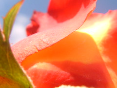 ...Pensando em Você... (...anna christina...) Tags: travel flowers blue light sunset sea summer brazil flower macro minasgerais green beach nature water brasil garden cores live natureza paisagem viagens lanscape serradamantiqueira mataatlântica annachristina frenteafrente annachristinaoliveira