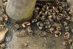 DSC_3619 (nicolasfeir) Tags: sexy water rio sex del puente uruguay la muelle mar agua no si crab playa sexo punta noon laguna este crabs barra palo orgy ria tarde arroyo posta cangrejos cangrejo orgia