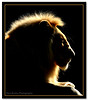 Gamka (Panorama Paul) Tags: lion nohdr sigmalenses mywinners abigfave shieldofexcellence nikfilters bratanesque nikond300 gamka wwwpaulbruinscoza travelsofhomerodyssey paulbruinsphotography