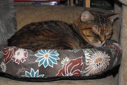 Resting Kitty