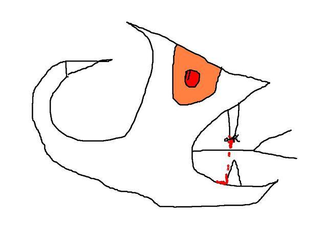 a baleia cobra