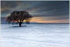 The Sunset Tree (glness) Tags: winter snow minnesota flat iso400 farm horizon farmland soil northdakota fields 24mm f80 endless productive fertile redrivervalley singleexposure 1125sec canon5dmarkii gregness canonef24104mmf4lis