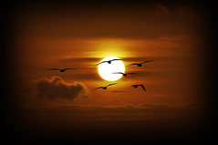 Afrika (RominikaH) Tags: africa sun sol clouds atardecer nikon sigma pajaros nubes marocco marruecos gaviotas d90 sunchine 18500mm fzfave rominikah mulaybuselham retofez100511
