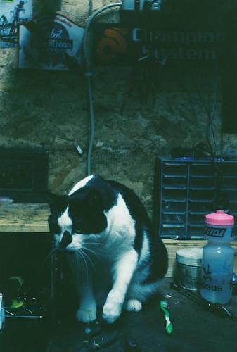 Katy's Cat