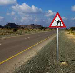 Watch out! (Gregor  Samsa) Tags: road sign out desert watch camel oman nizwa