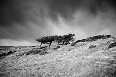 Trees on Hoad under Grey Skies (Steve Reynolds 1966) Tags: trees cumbria ulverston hoad monochromelandscape