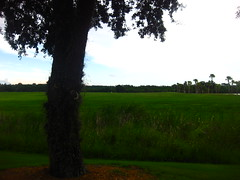 Floridian symmetry. (Siridiocy) Tags: grass landscape symmetry hilly
