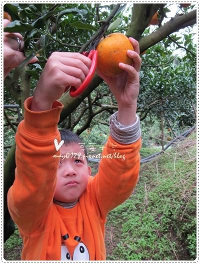 關西採草莓橘子牛欄河2010.02.20-35