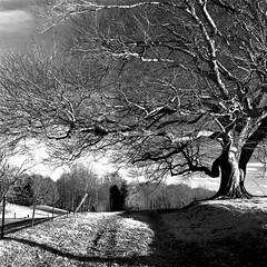 Big Man On Campus (Baab1) Tags: trees winter blackandwhite monochrome clouds countryside fences maryland driveways oldhouses goldenhour birchtrees oldtrees d300 southernmaryland farmhouses calvertcountymaryland 1755nikkor mywinners hunntingtownmaryland niksoftwareshadows