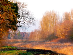 Sunset on Westhay reedbeds (jump for joy2010) Tags: landscape landscapes somerset levels westhay