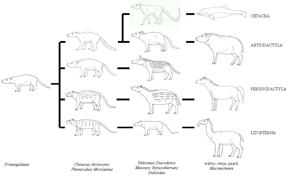 evolution andrewsarchus