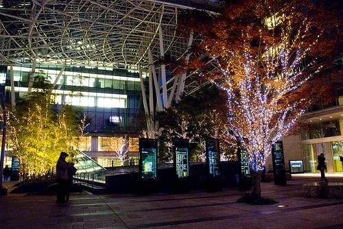 東京 六本木 街景 柴犬