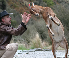 New Zealand (Bilirubin68) Tags: animals funny very goat