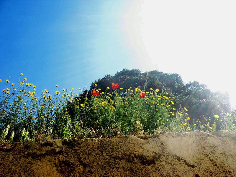 20-3-2010-facing-d-sun