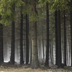Mist between the trees (Aqua Libra) Tags: trees mist snow germany winterberg soulscapes idream specialpicture nordenau goldenart sailsevenseas extraordinairyvsimpressive