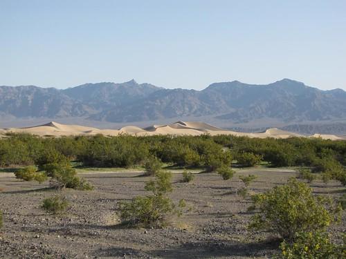 Mesquite Flat Dunes-1