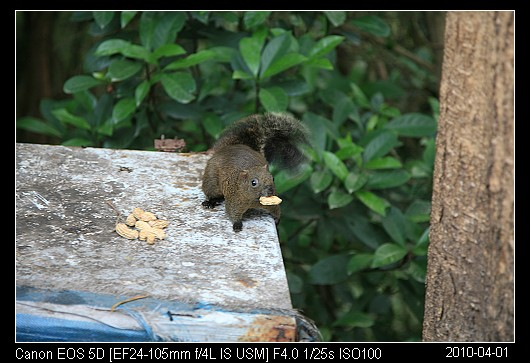 20100401Squirrel
