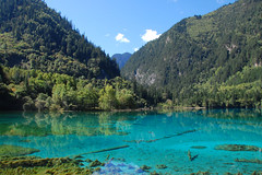 Across Five Flower Lake (Sifter) Tags: china blue lake reflection nature water beauty catchycolors nikon turquoise sichuan jiuzhaigou 18200 d40 fiveflowerlake