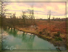 """A Forest River. ("""""""" Irene """""""") Tags: sky snow cold green ice nature beautiful forest reflections river skies quiet colours peace natural freezing calm stunning inspire mothernature allrightsreserved courtown theinspirationgroup irenecartonsphotography"""