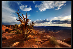 Canyonlands National Park (Dylan MacMaster) Tags: landscape utah canyonlandsnationalpark moab canyons junipertree fotocompetition fotocompetitionbronze fotocompetitionsilver fotocompetitiongold