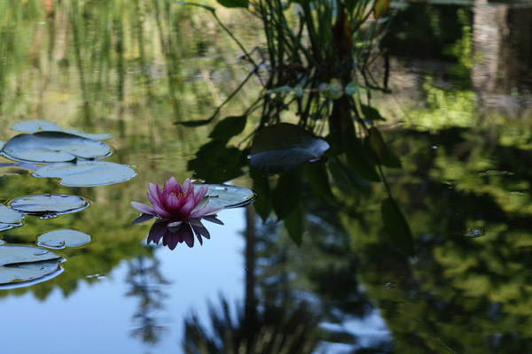 jardin-botanique-porto05