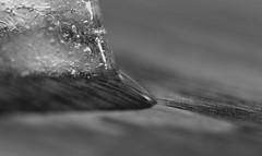 Tabletop Ice Melt (Catskills Photography) Tags: macro melting bokeh change meltingice canon60mmusmmacrolens ourdailychallenge