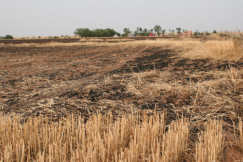 Another field burned a little too close to Dan's home.