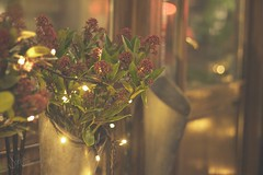 Lights and flowers (sonia.sanre) Tags: pink bokeh warmth cosy bonito beautiful decoracion decoration deco noche night luces lights flores flowers