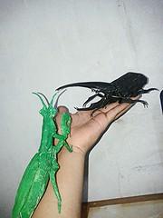 praying mantis - satoshi kamiya (javier vivanco origami) Tags: praying mantis hercules beetle satoshi kamiya javier vivanco origami ica peru