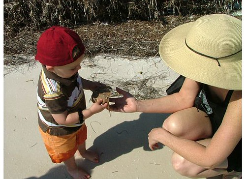 Grandmom shows him a horseshoe crab