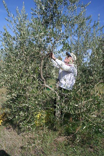 Olives_Art_ 2009 007