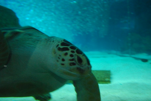 COEX Aquarium
