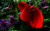 night-flowers-1920x1200 (wiifm) Tags: wellington botanicgardens 1920x1200 panasonicdmctz3