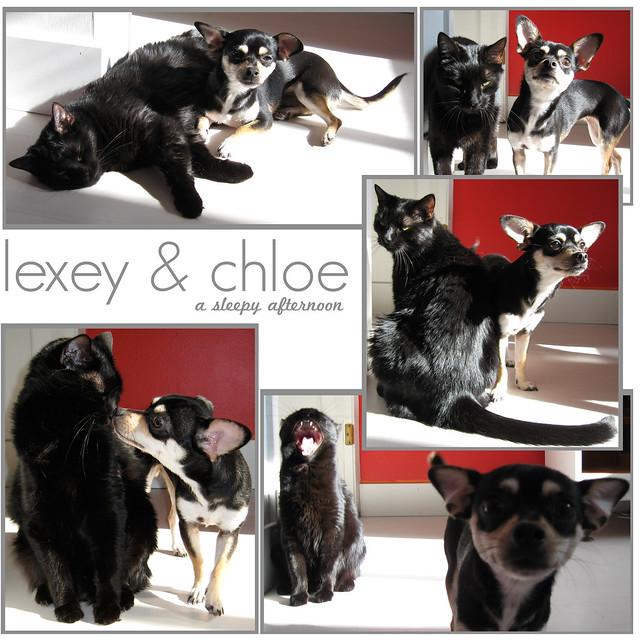 My Pets - Lexey & Chloe