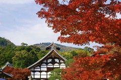 (nobuflickr) Tags: nature japan kyoto  tenryujitemple autumncolors vosplusbellesphotos