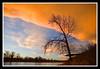 Intense (stevenbulman44) Tags: cloud tree calgary water chinook naturesfinest mywinners impressedbeauty impressedbyyourbeauty citrit