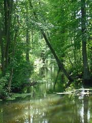prehistoric looking marsh somewhere 2 (EuCAN Community Interest Company) Tags: poland 2009 eucan milicz baryczvalley