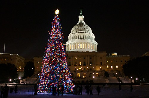 U.S. Capitol and Capitol Tree 2009